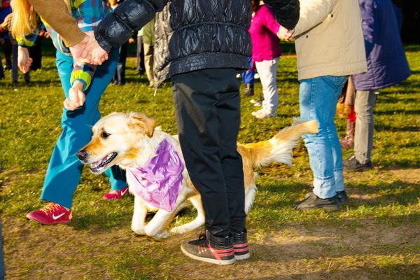 Занятие с собаками-терапевтами в ГУ «Вспомогательная школа интернат № 7»