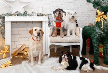 Рождественская Собачья Party: волшебный праздник для всей семьи
