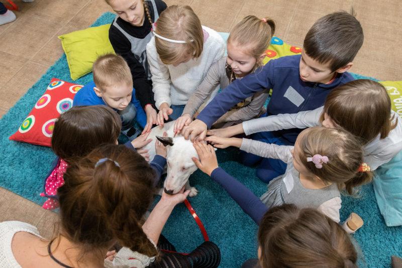Тренинг по освобождению от страха собак