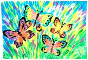 бабочки-min